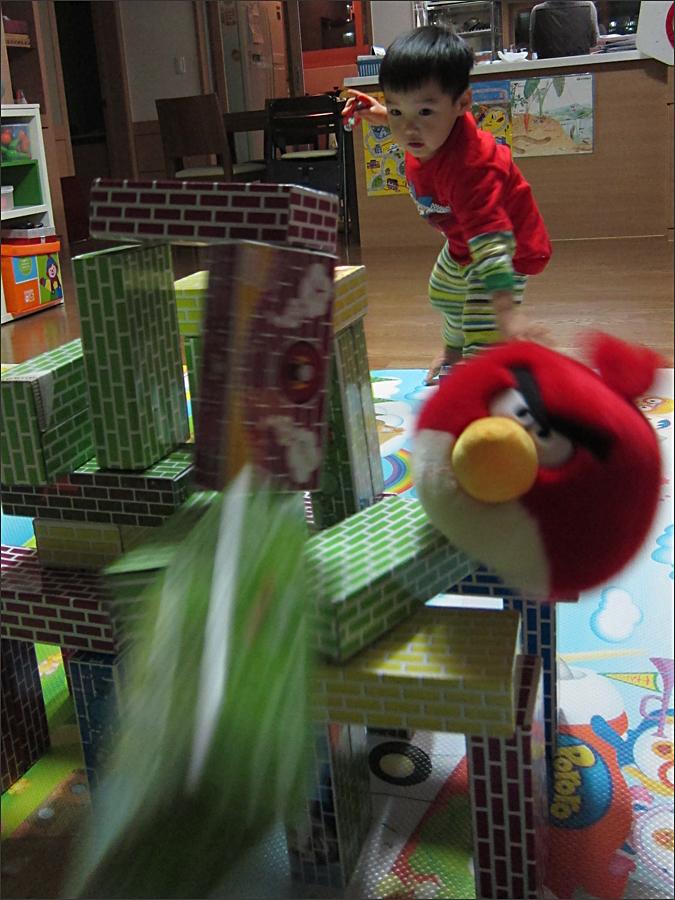 리얼 앵그리버드(Angry Birds)