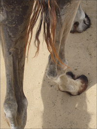 명사산을 오르는 낙타