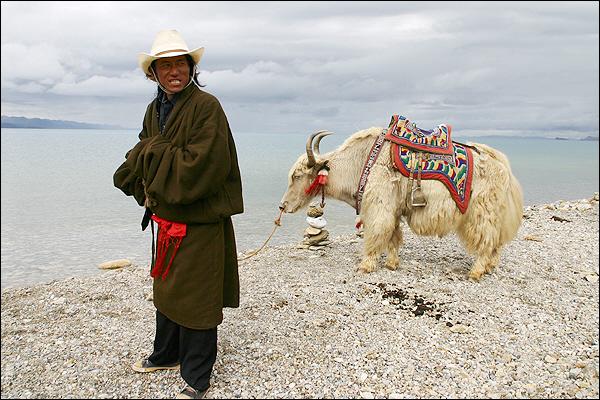 티베탄과 야크