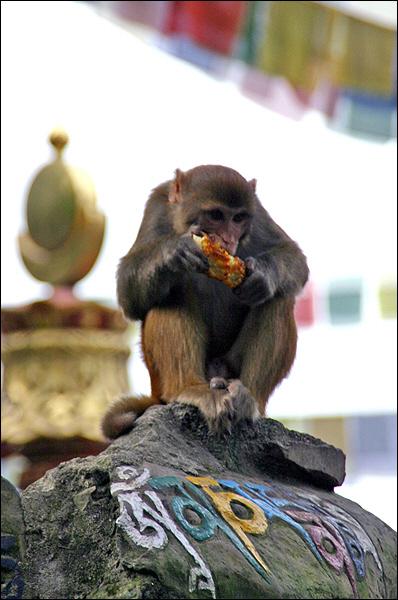 원숭이 사원