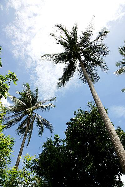 길어진 나무들
