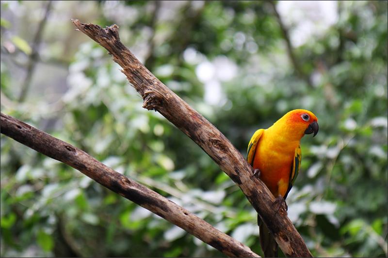 가지위의 앵무새