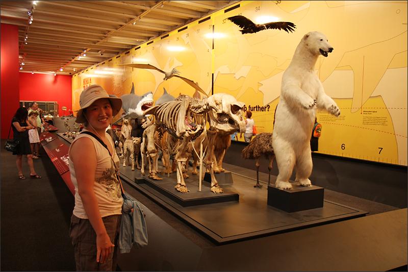 퀸즐랜드 박물관에서