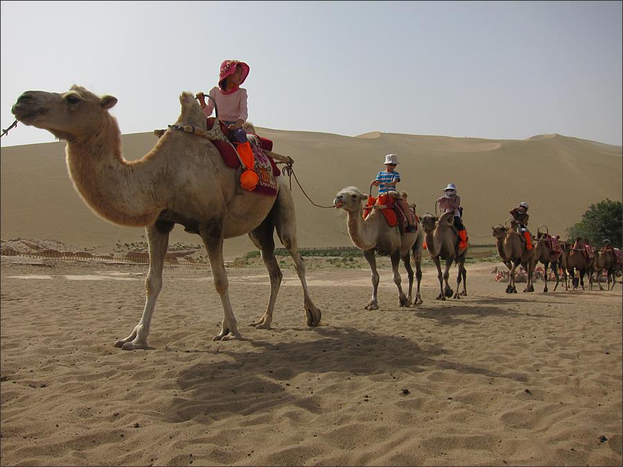 낙타를 타고 오는 관광객