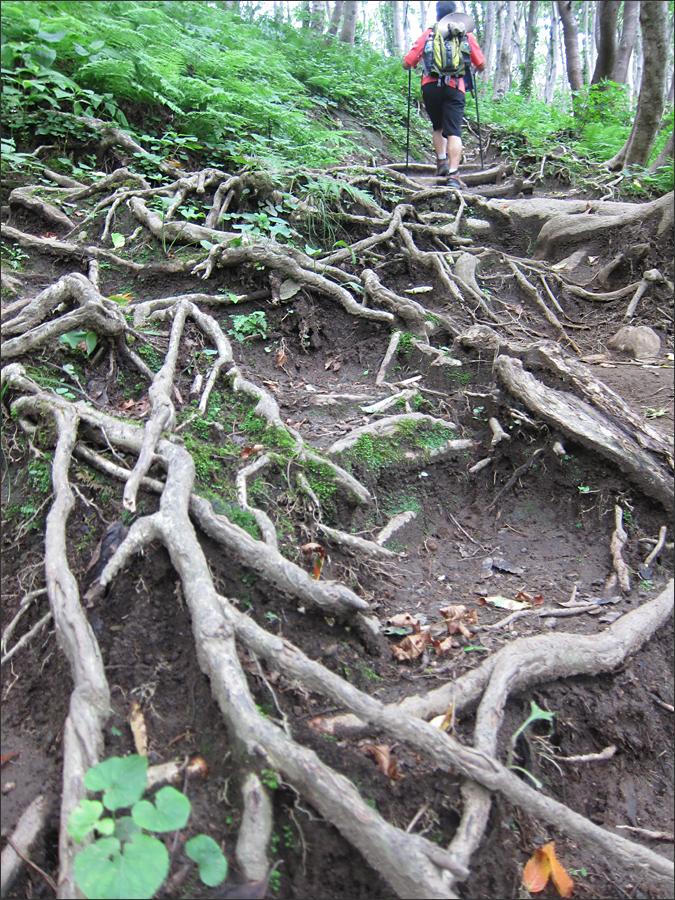 뿌리를 드러낸 나무