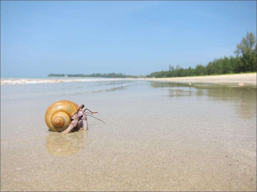 해변에서 만난 집게