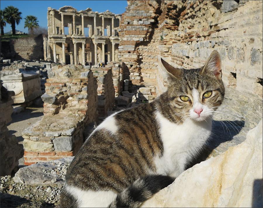 가장 햇볕이 잘드는 곳은 역시 고양이의 차지다. 뒤편으로 켈수스 도서관이 보인다.